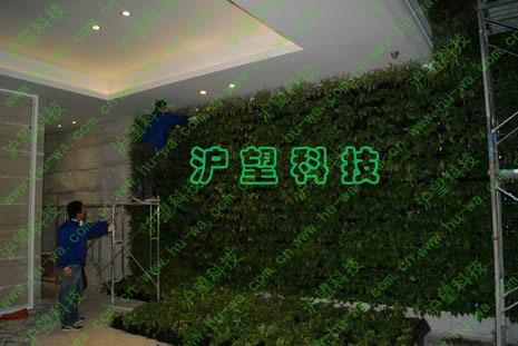 垂直绿化生态植物墙-沪望科技稼禾集团项目