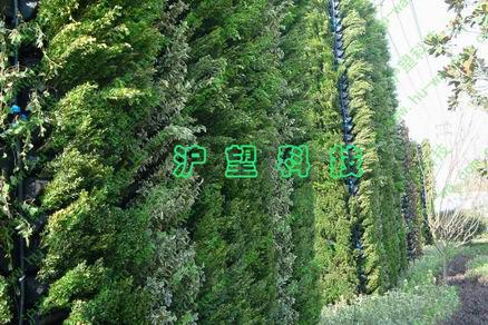 垂直生态植物墙-沪望科技中南城项目