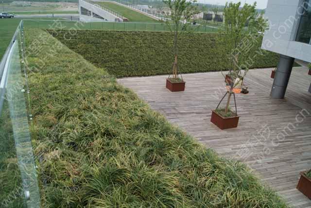 国家重点工程上海青草沙文化展示中心垂直绿化墙