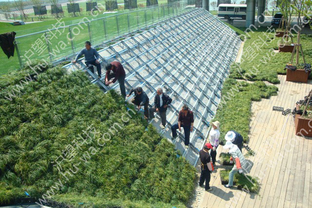 青草沙立体绿化施工现场(二)
