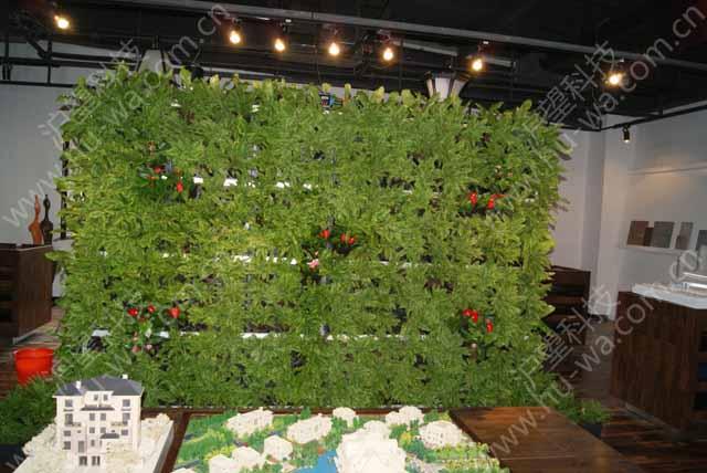 满布式垂直绿化墙