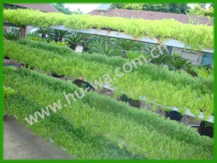 沪望植物培植基地