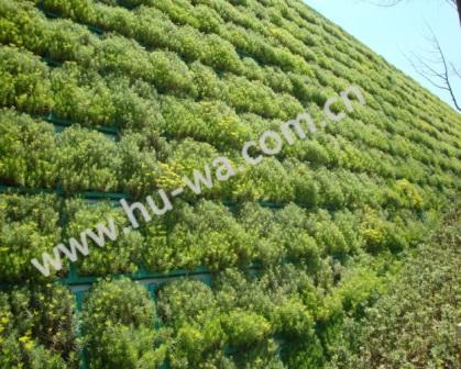 贵阳中天会议中心西立面植物墙体绿化
